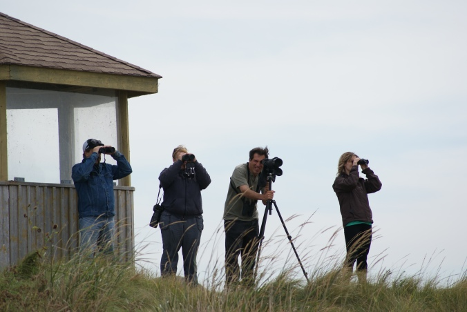 Groups of birders at Whitewater Lake. Photo by Bev Sawchuk.