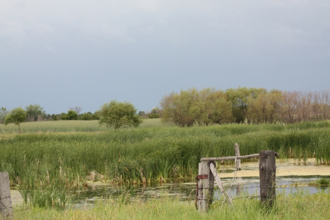 Wetlands surrounding Tilston are home to an abundance of birds and other wildlife. Photo by Tim Poole