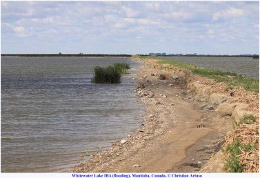 00_Artuso_Whitewater Lake flooding_7550_old road