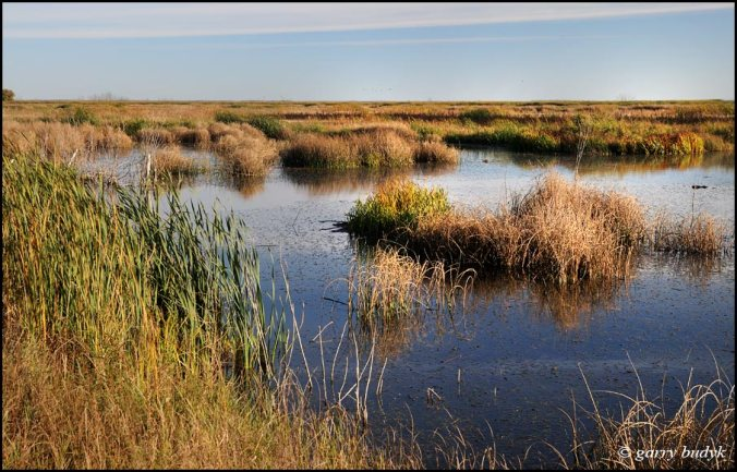 Open wetlands like this are great for roosting waterfowl. Photo copyright Garry Budyk