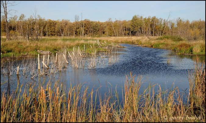 Another of the wetlands surrounding the lakes. Photo copyright Garry Budyk