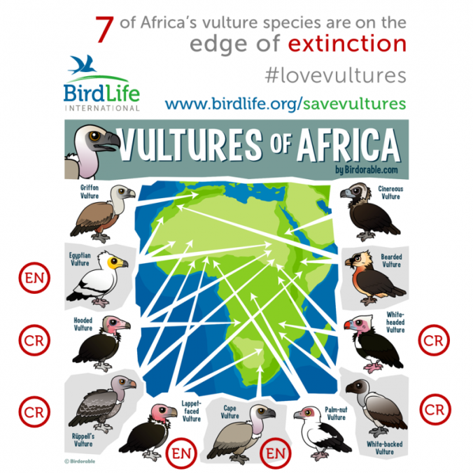 vultures-of-africa-extinction