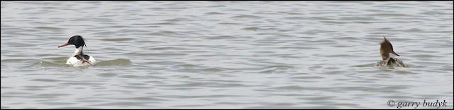 RBME N Shoal Lake