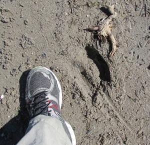 Moose tracks reduced