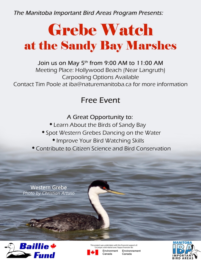 Grebe_Watch_EventPoster_1 (1)