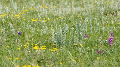 Mixed-grass Prairie