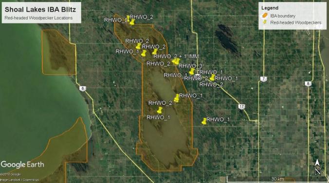 Shoal Lakes RHWO map.jpg