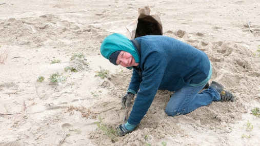 Sandy Bar Weed Pull-October 2018-Lynnea A Parker-1120827