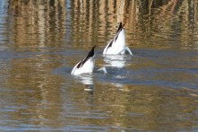 AMAV bottoms Oak Lake Gillian Richards
