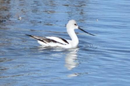 AMAV Oak Lake Gillian Richards