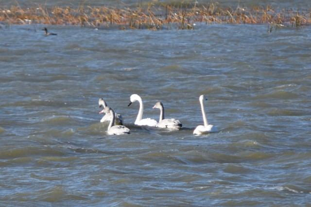 TUSW Oak Lake Gillian Richards