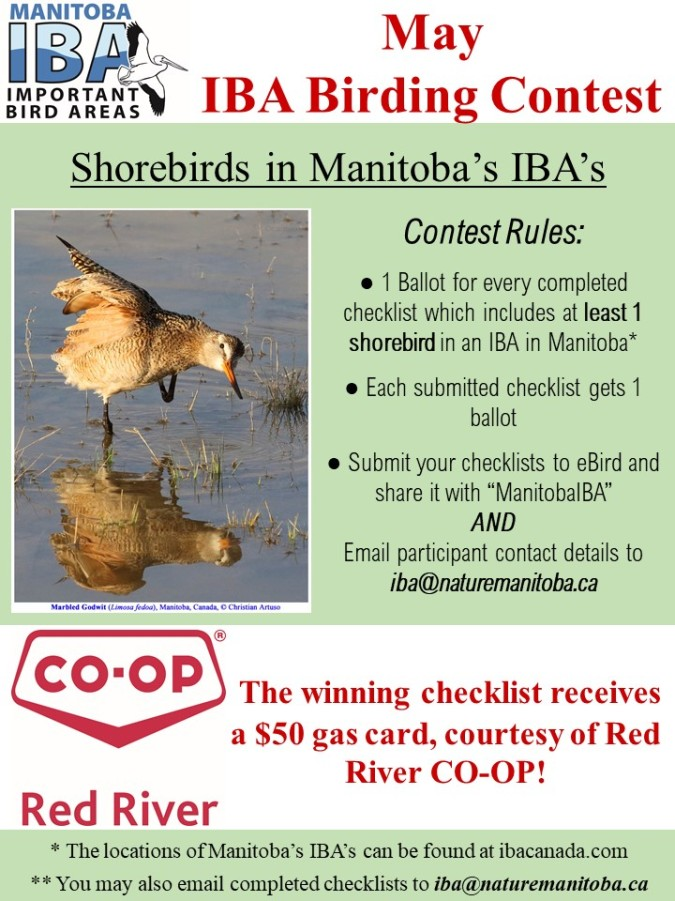 May IBA Birding Contest.jpg