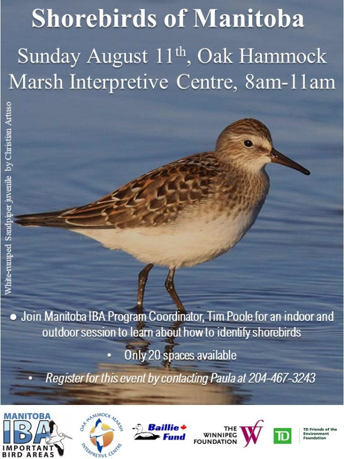 Shorebirds Workshop at OHMIC 11th August 2019 WRSA
