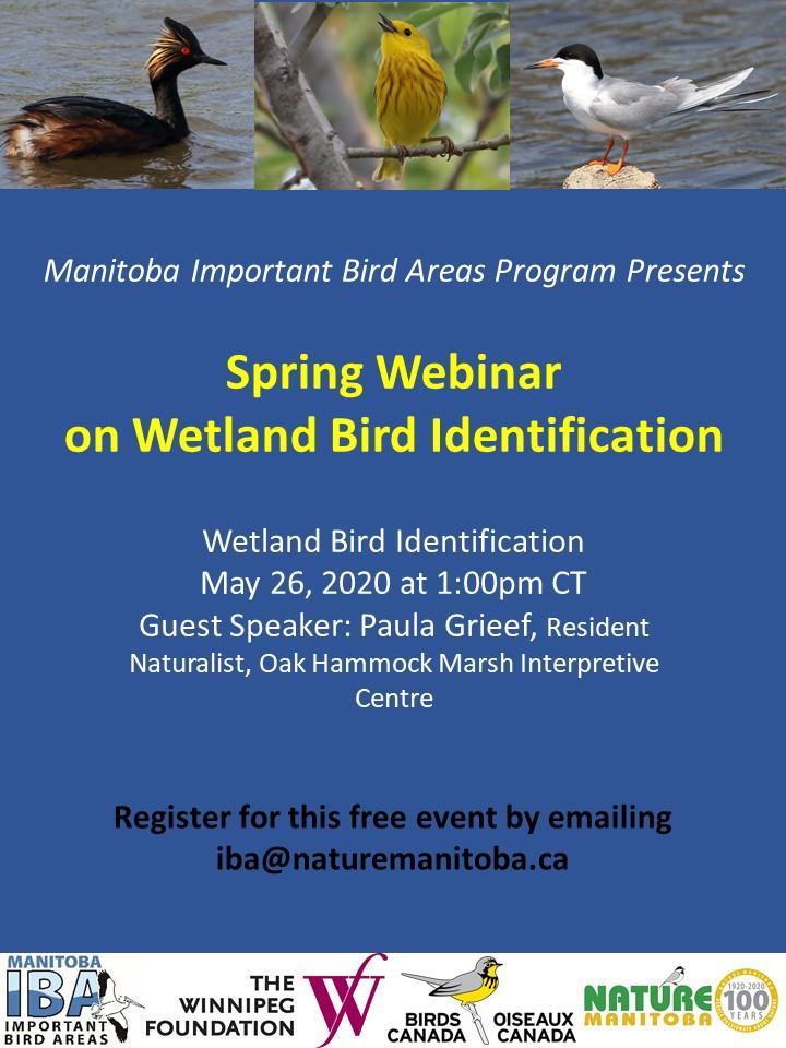 IBA Manitoba Wetlands Poster