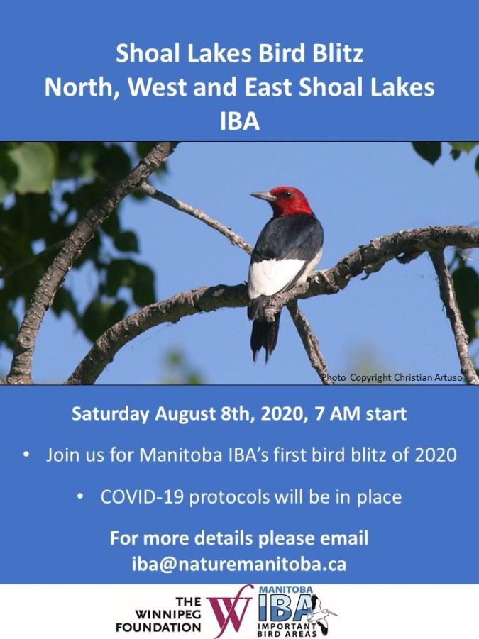 Shoal Lakes Bird Blitz Poster