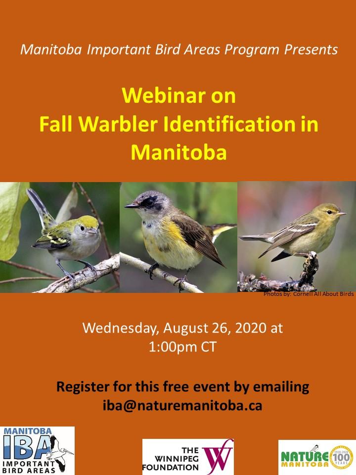 IBA Manitoba Fall Warblers Poster